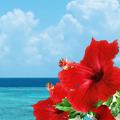 沖縄久米島天然水ウォーターサーバーイメージ